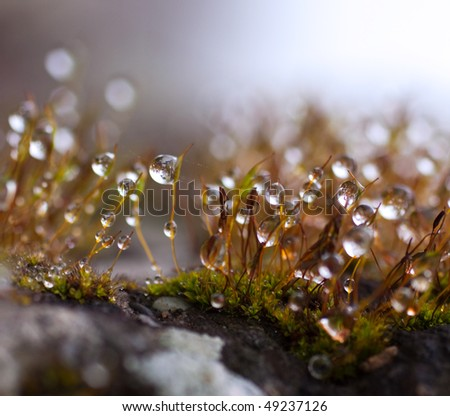 Water drops on top of little branches of grass - stock photo