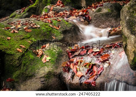 Water flow among the green forest day, fallen leaves on the rocks, all filmed at slower shutter speed - stock photo