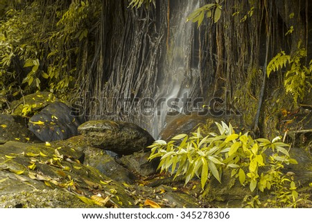 Water flows along the overgrown trees - stock photo