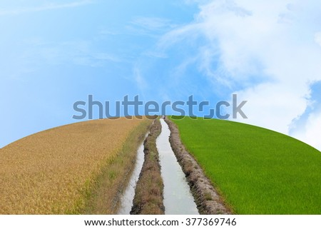 Water flows through the middle to the center of frame and flows between a dry and arid rice field and a green rice field on the earth shape with blue sky and cloud - stock photo