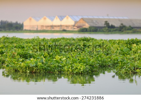 Water Hyacinth and factory behind - stock photo