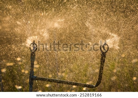 Water irrigation of corn field. - stock photo