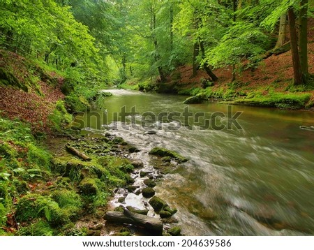 Water level under fresh green trees at mountain river. Fresh spring air in the evening after rainy day.