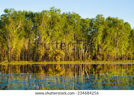 Water lilies and reflections of paperbark trees in Sandy Billabong, Kakadu, Australia - stock photo