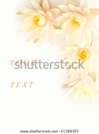 Water lilies composition - stock photo