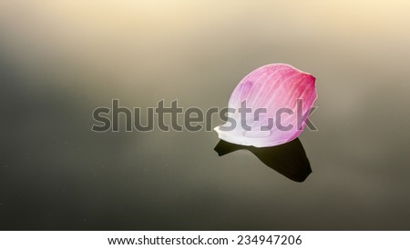 water lily, be peaceful - stock photo