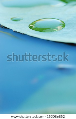 water lily leaves and water drops - stock photo