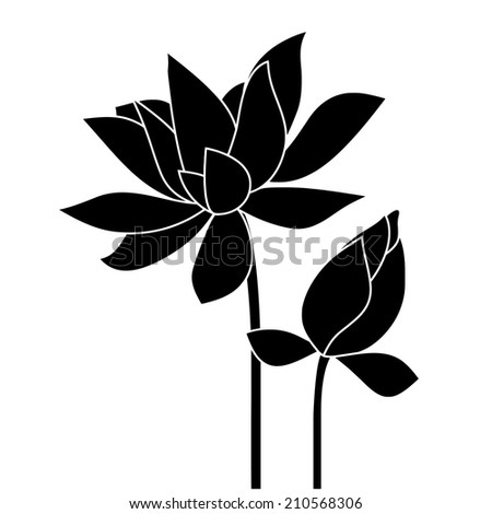 Water lily, lotus. Flowers pattern.  - stock photo