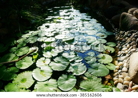 Water lily pond in a garden.        - stock photo