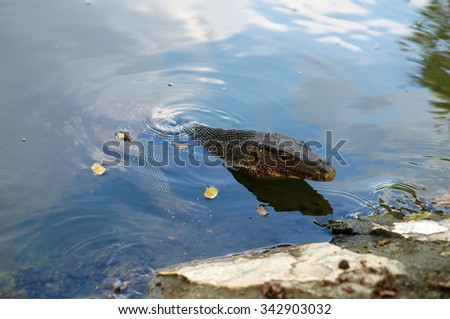 Water monitor lizard in river , thailand - stock photo