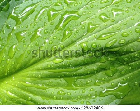 Water on green leaf plant in Spring