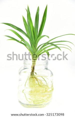 Water Plants Glass Vase Isolated On Stock Photo Royalty Free