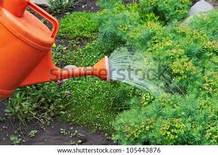 Water pouring from orange watering can onto garden natural flowers - stock photo