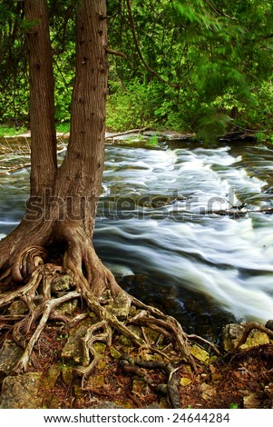 Water rushing by tree in river rapids in Ontario Canada - stock photo