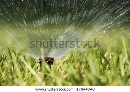 Water splashing from a sprinkler hidden in the grass. - stock photo