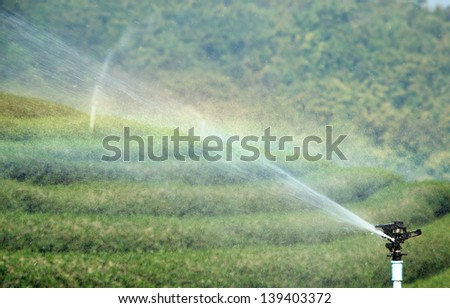 Water spray green tea plantation and Rainbow - stock photo