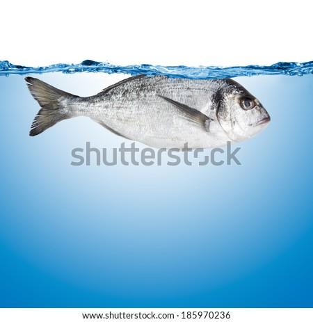 water surface isolated on white background with bubbles and dorado fish