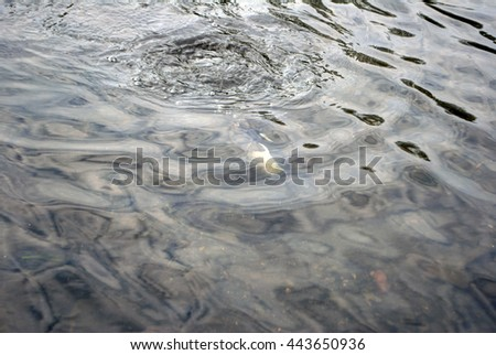 Water surface with a duck below