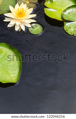 Water Surface with Floating Yellow Water Lily and Green Leaves - stock photo