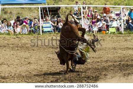 WATER VALLEY, CANADA - JUN 6 2015:Unidentified Cowboy participating in the Bull Riding  at the Water Valley Rodeo. This annual event is important for the rural as well as the sport loving community. - stock photo
