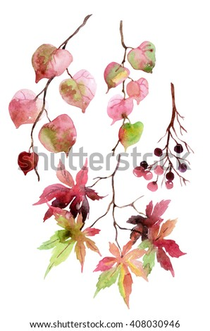 Watercolor autumn leaves, branches and berry. Linden, japanese maple and berries branches set isolated on white background. Hand painted autumn garden elements illustration  - stock photo