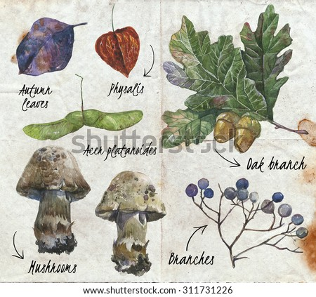 Watercolor autumn nature set. Leaves, oak, berries, acorn seed, mushroom painted in watercolor.  - stock photo