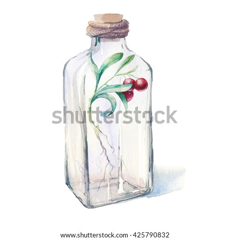 Watercolor berries plant with roots in glass bottle. Hand painted botanical illustration of sprout isolated on white background. Fantasy collection - stock photo