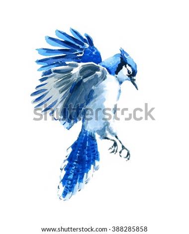 Watercolor Bird Blue Jay Flying Hand Stock Illustration ...