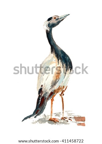 Watercolor bird illustration. Hand painted bird.