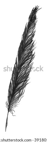 Watercolor black and white monochrome single feather isolated