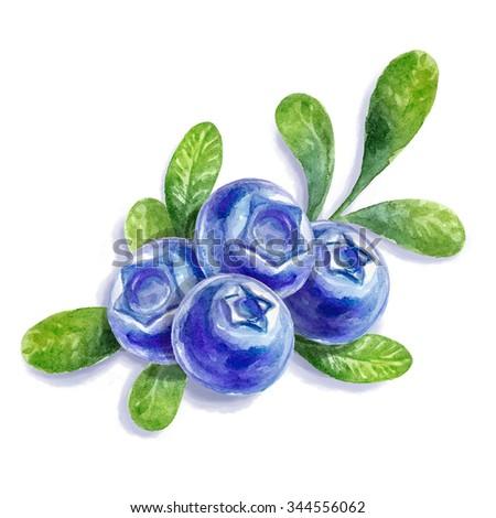 Watercolor blueberries. - stock photo