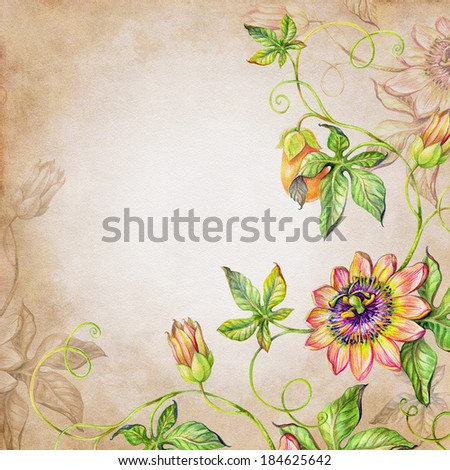 watercolor botanic illustration of passion flower and fruit, vintage artistic background - stock photo
