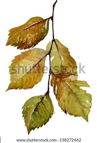 watercolor branch - stock photo