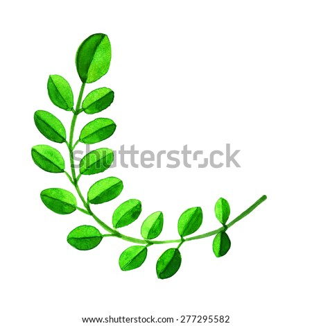 Watercolor branch with green leaves isolated on white background. Hand painting on paper  - stock photo