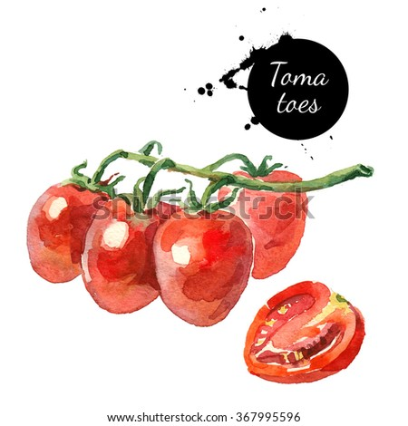 Watercolor datterino tomatoes. Isolated eco food illustration on white background - stock photo