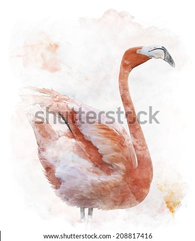 Watercolor Digital Painting Of  Flamingo Bird - stock photo