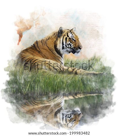 Watercolor Digital Painting Of  Tiger  On Grassy Bank With Reflection - stock photo