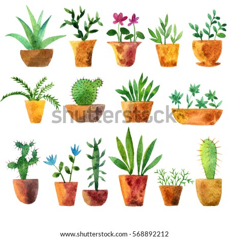 house plants drawing. watercolor drawing house plants cacti and succulents hand drawn illustration