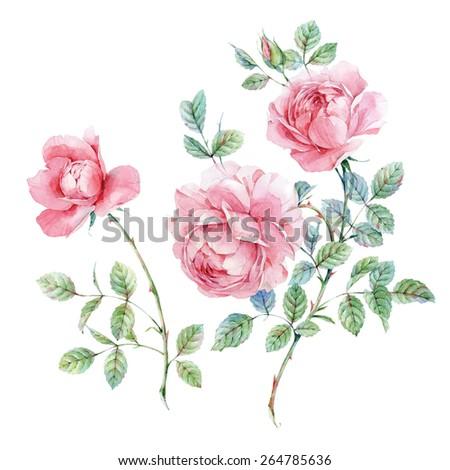 Watercolor English roses - stock photo