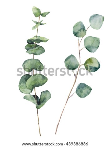Watercolor eucalyptus round leaves and branches. Hand painted baby eucalyptus and silver dollar elements. Floral illustration isolated on white background. For design, textile and background. - stock photo