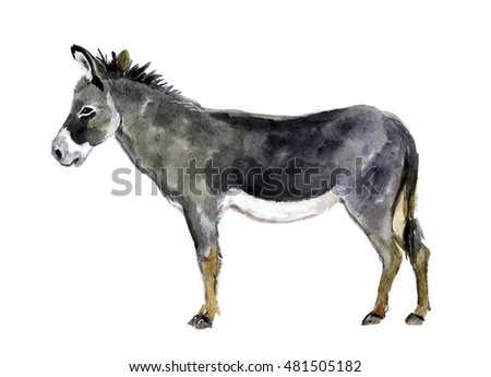 Watercolor Farm Animals. Donkey Hand Drawn Illustration isolated on white background. Watercolor animals. Watercolor pets. Watercolor farm animals. Funny animal. Funny watercolor donkey sketch. Print
