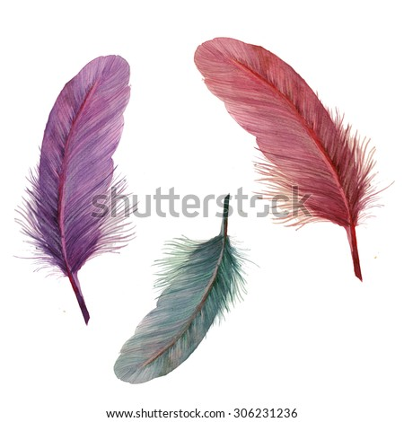 Watercolor feathers collection. Hand drawn artistic multicolor feather set isolated on white background. Three various bird feathers, raster illustrations