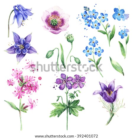 Watercolor floral collection with beautiful wild flowers, Anemone, Forget-me-not, Poppy, Columbine flowers. Summer meadow flowers. Floral set for beautiful design - stock photo