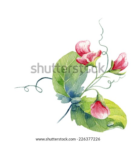 watercolor flower of peas - stock photo