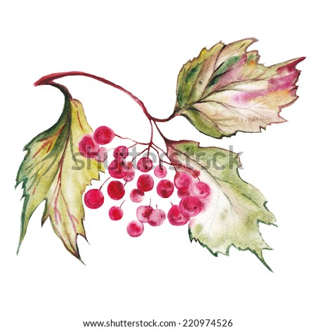 Watercolor flowers.Autumn leaves, autumn branches, clusters. - stock photo