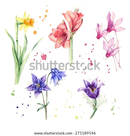 Watercolor flowers illustrations - stock photo