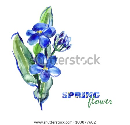Watercolor -Forget-me-not- - stock photo