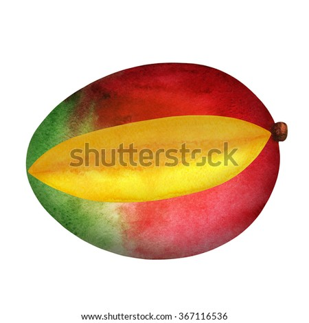 Watercolor fresh sliced mango fruit, cut piece, closeup isolated on white background. Hand painting on paper. Art design element - stock photo