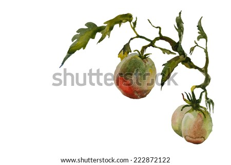 Watercolor garden vignette ripe and green tomato twig with leaves and flowers original illustration - stock photo