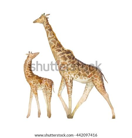 Watercolor giraffe family. Two hand painted animals from Africa isolated on white background. Natural art set  - stock photo